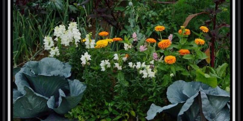 Garden Pic 4