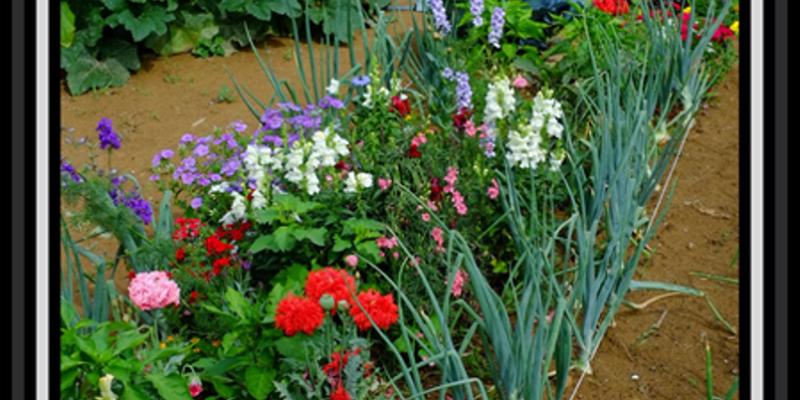 Garden Pic 6